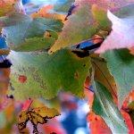 فصل الخريف  15 Size:197.20 Kb Dim: 800 x 600