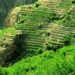 الجبل الأخضر Size:75.80 Kb Dim: 600 x 406