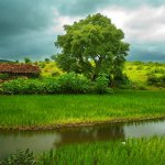مناظر طبيعية بالهند13