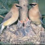 طيور Size:73.70 Kb Dim: 800 x 620