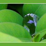 قطرات ماء