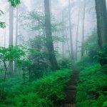 الطبيعة