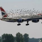 اجمل صور الطيران1 Size:34.90 Kb Dim: 700 x 468