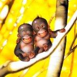 جبلاية القرود