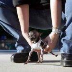 اصغر الحيوانات1