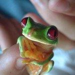 اصغر الحيوانات3