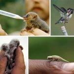 اصغر الحيوانات4