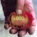طماطم Size:28.30 Kb Dim: 329 x 353