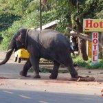 بالصور فيل يقتل مدربه؟؟؟1