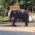 بالصور فيل يقتل مدربه؟؟؟2