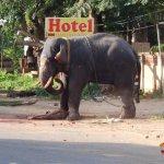بالصور فيل يقتل مدربه؟؟؟3