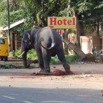 بالصور فيل يقتل مدربه؟؟؟4