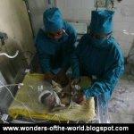 طفلة هنديه ولدت وقلبها خارج ج2
