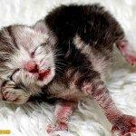 ولادة قطة عجيبة براسين1