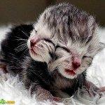 ولادة قطة عجيبة براسين2