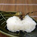 مأكولات يابانية غريبه5