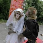 العريس 7 سنوات والعروس 6 سنوا2 Size:66.20 Kb Dim: 348 x 500