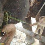 قرد و فيل صداقه غريبه2