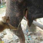قرد و فيل صداقه غريبه3