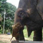قرد و فيل صداقه غريبه7