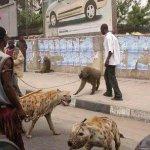 ماذا يربي النيجريين في بيوتهم1