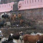 الهندوس في الهند يرمون موتاهم6