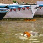 الهندوس في الهند يرمون موتاهم9