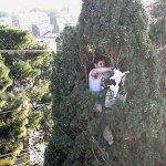 رجل يخاطر بحياته من اجل قطه3