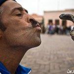 ف المغرب 8