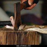 مسالخ للثعابين 1
