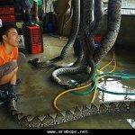 مسالخ للثعابين 3