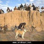 قتال الكلاب التقليدية بأفغانس1