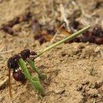 موسم اكل النمل1