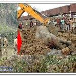 قطار يصدم انثى الفيل وهي حامل7