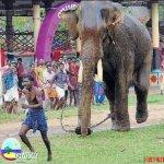 الفيل لما يعصب مشكله ...1