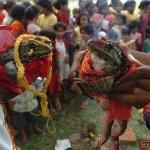 قرية هندية تحتفل بزواج ضفدعين1