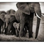 024_Elephant-Mother-&-2-Bab