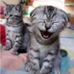 laughingkitty