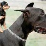 doggyback