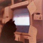 study_cat