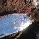 أغرب سمكة في العالم3