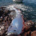 أغرب سمكة في العالم5