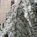 الثلج في الصين6