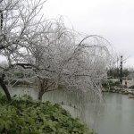 الثلج في الصين8