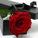 وردة2