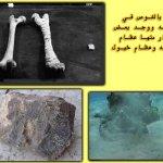 صور متنوعة1