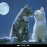 قطط Size:24.90 Kb Dim: 640 x 509