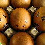 البيض وصور مميزه له 8