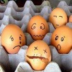 البيض وصور مميزه له 11