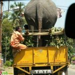صور عجيبه من الهند7